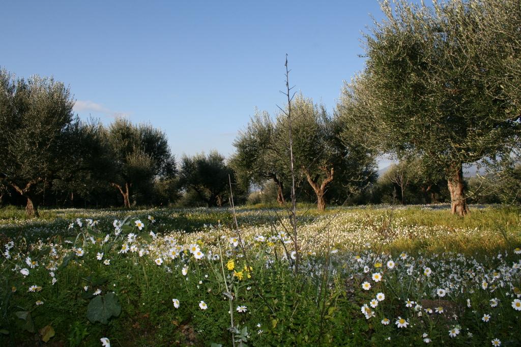 Olivenlund med biodiversitet.