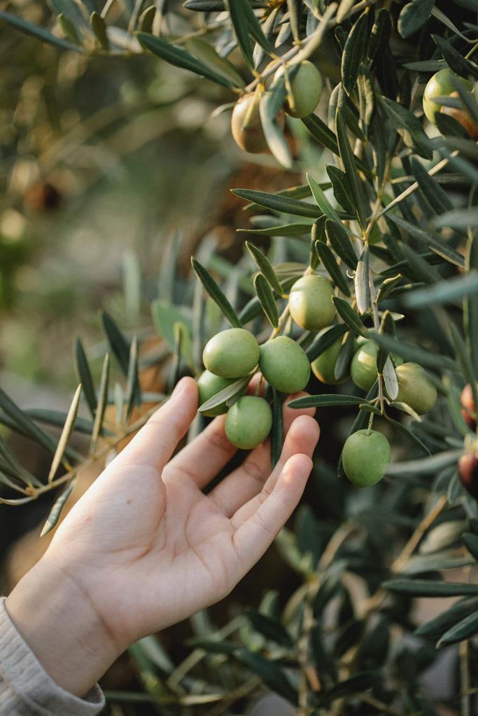 Umodne Kalamata oliven