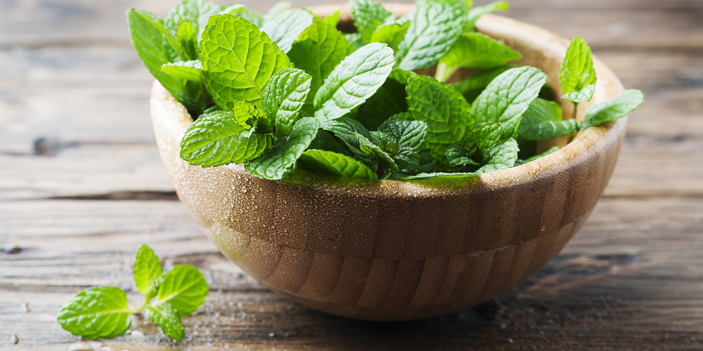 Mint mint used as powerful herbal remedies with mint tea