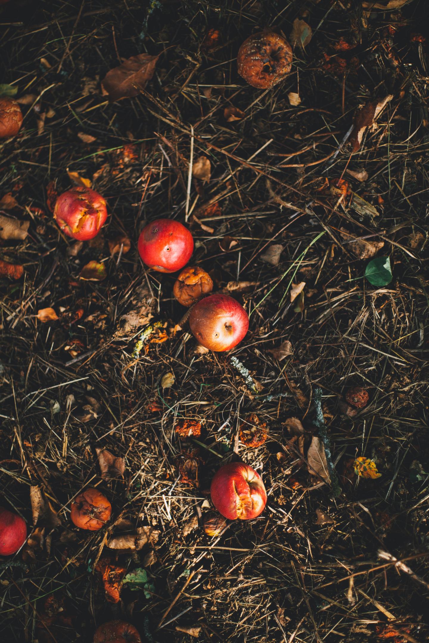 Miscelare scarti secchi e umidi garantisce la buona resa del compostaggio