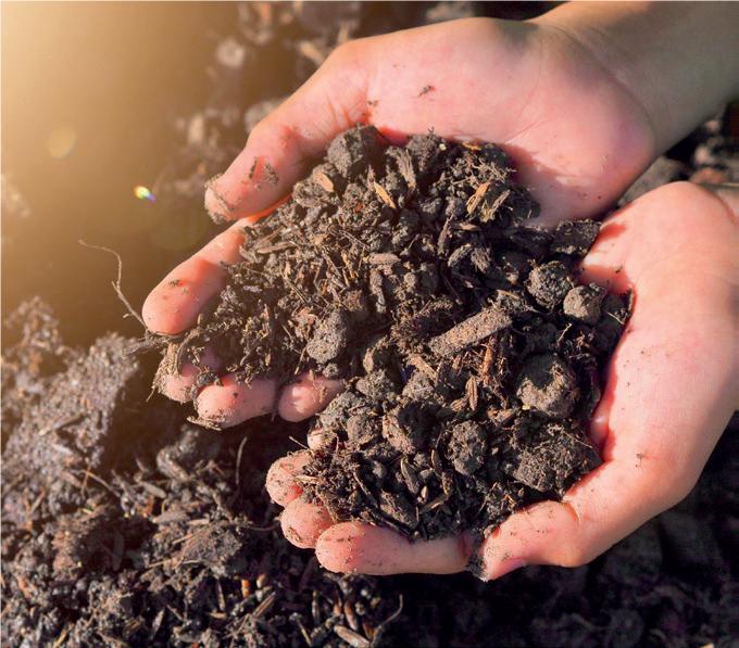 compost fertilizzante naturale