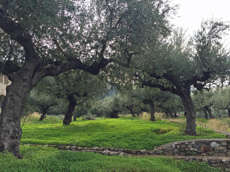 Olivenlund