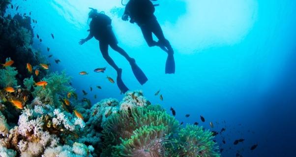Scuba diving, water sports, underwater world